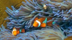 files-science-us-climate-oceans-coral-1509560046148
