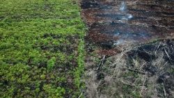 indonesia-environment-forest-palm-oil-1520143983010.jpg