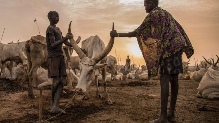 topshot-ssudan-cattle-droving-1520610783409.jpg