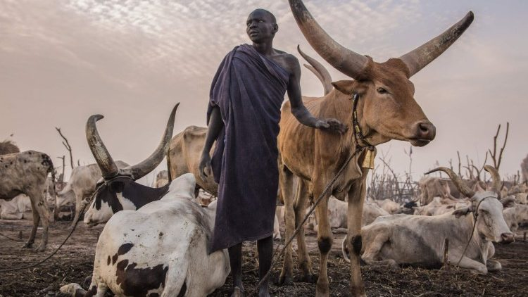 topshot-ssudan-cattle-droving-1520610788194.jpg