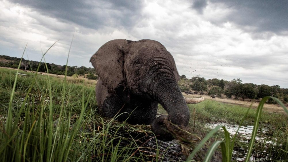 files-botswana-environment-elephants-poaching-1536086514802.jpg