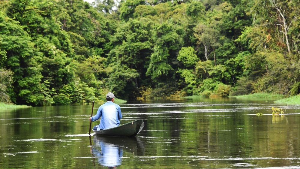 brazil-amazonia-environment-pirarucu-1557454190808.jpg
