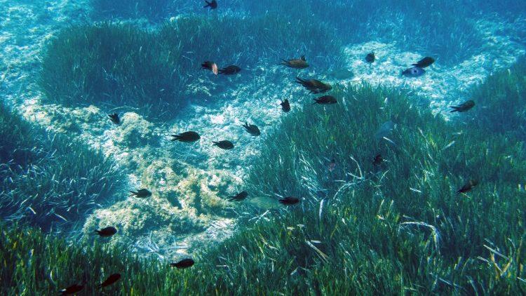 Résultats de recherche d'images pour «le plancton (la mer) qui produit de l'oxygène,»