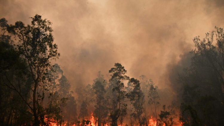 Forest fires in Australia