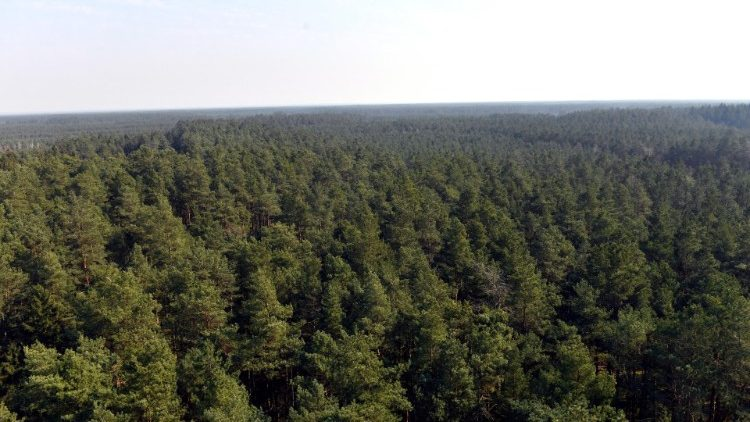 A forest in Poland
