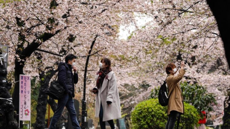 People enjoy cherry blossoms with unseasonable snowfall, despite Covid-19