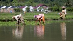 Workers in a rice field in Indonesia on June 3, 2020.