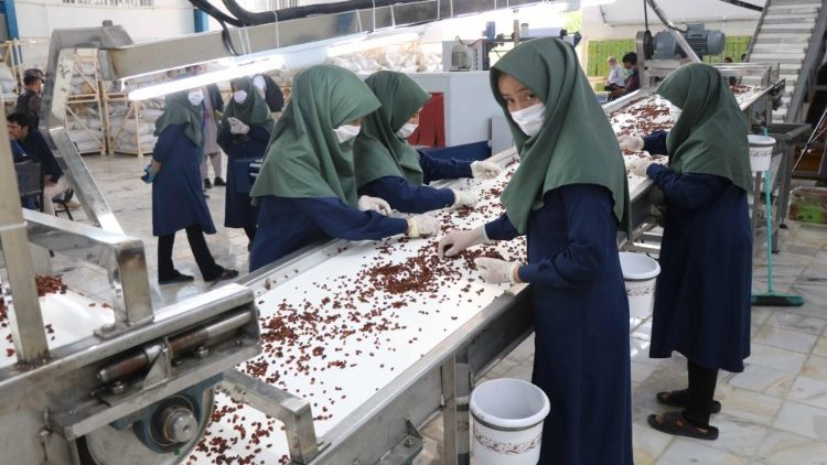 Raisin production in Herat