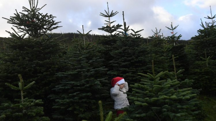 Sebastian Barry, aged 4, stands in a forest of Christmas trees before his family choose which one to buy at Wicklow Way Christmas tree farm in Roundwood