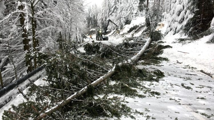 Workers fell a snow covered tree at a local road near Altenberg