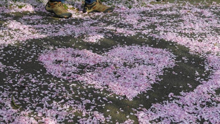 A man walks past cherry blossom formed into a heart shape in Greenwich in London