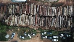 Illegal logging in the Amazon rainforest in Anapu, Para state, Brazil.