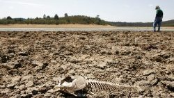 FILE PHOTO: A skeleton of a fish is seen on the dry bed of Lake Penuelas on the outskirts of Valparaiso