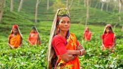 Rural women make up 43% of agricultural work force in developing countries.