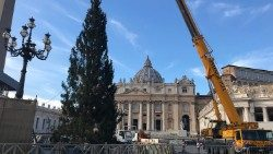Christmas tree being put up in St Peter's Square