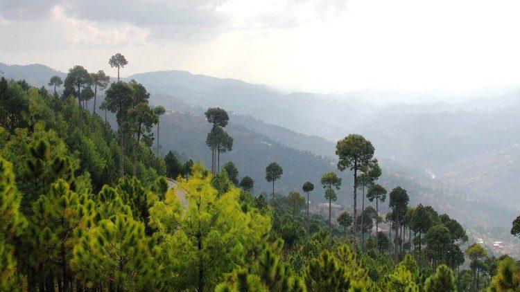 2019.03.28 foresta in Pakistan, alberi, ambiente, natura, salvaguardia pianeta