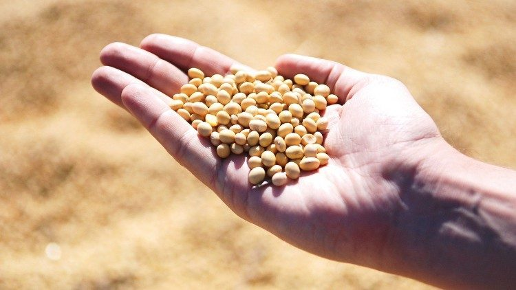 2 000 millones de personas no tienen acceso regular a alimentos inocuos, nutritivos y suficientes.