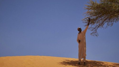 The Laudato Tree initiative aims to plant 7 million trees across the Sahel