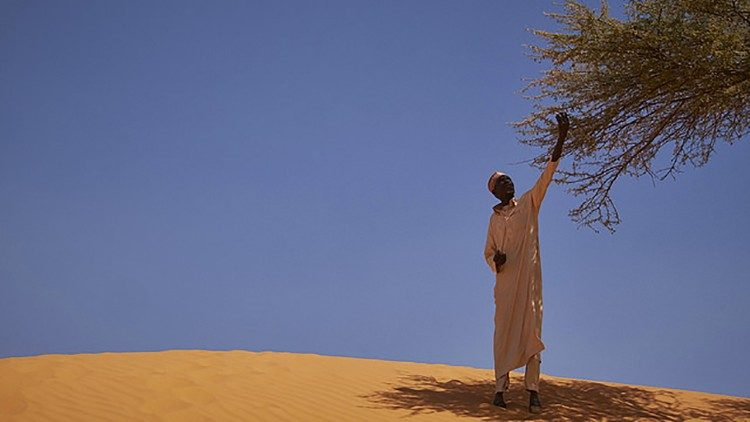 Laudato sì: Man on the outskirts of Diffa in the Republic of Niger picks leaves off a tree on a sand dune (Courtesy Caritas Internationalis)