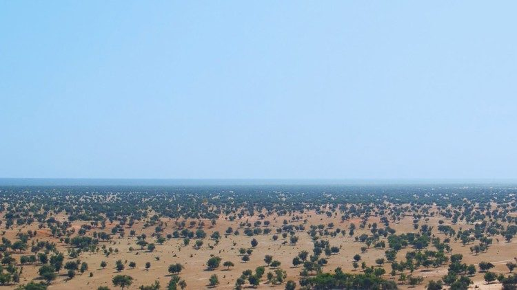 Trees in the Sahel
