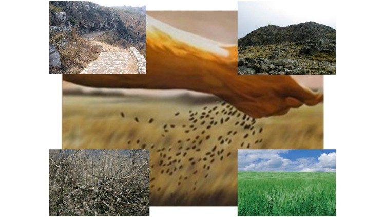2020.07.11 La parabola del seminatore e del seme