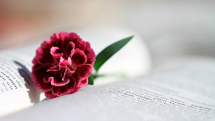 A flower rests upon an open Bible