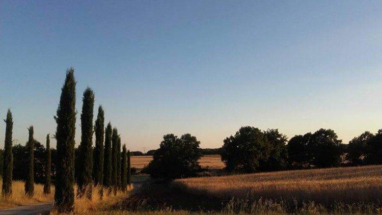 Os antigos campos de trigo da empresa Fornovecchino