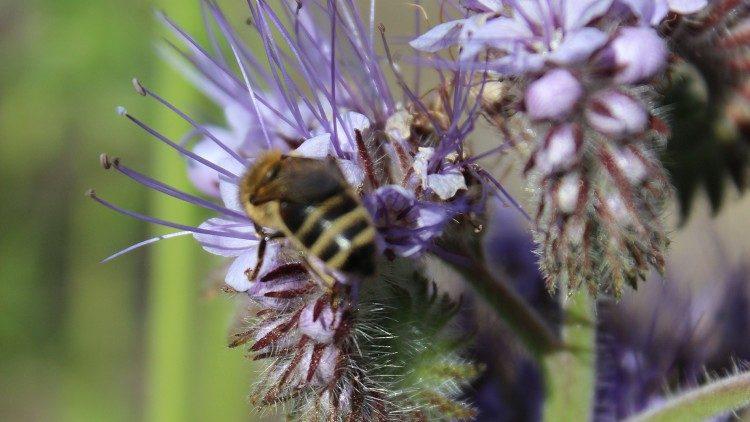 Fiori e api del giardino Laudato si' di Fahr